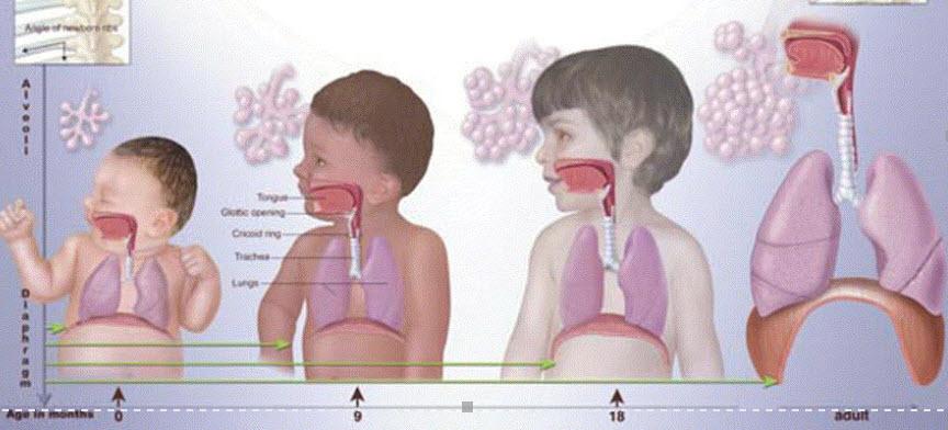 peds respiratory
