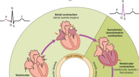 Peds Cardiac
